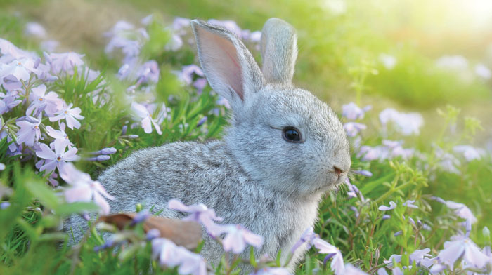 bunny in a field of flowers